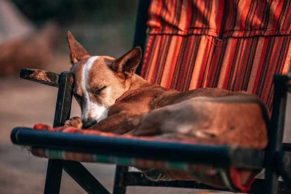 Dogs and Sleep:  Changing Environment Conditions may affect the quantity and quality of sleep.