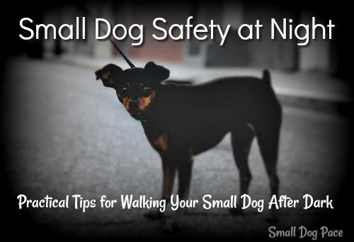 Small Dog Safety at Night