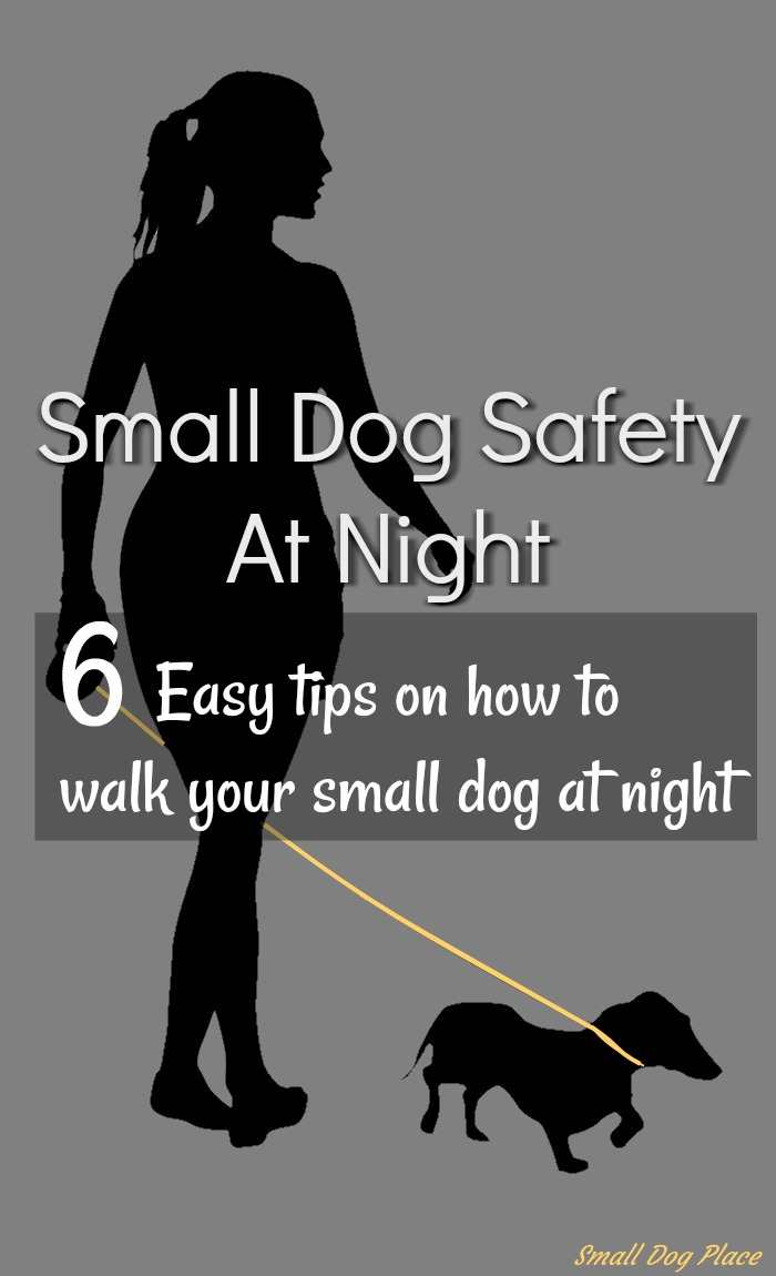 Small Dog Safety At Night Pin:  6 Easy Tips on how to walk your dog at night.