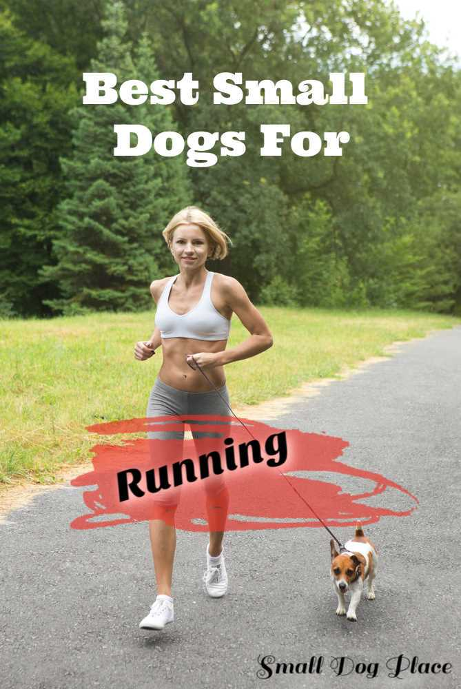 Running with your small dog can be a great way to exercise and bond with your pooch.