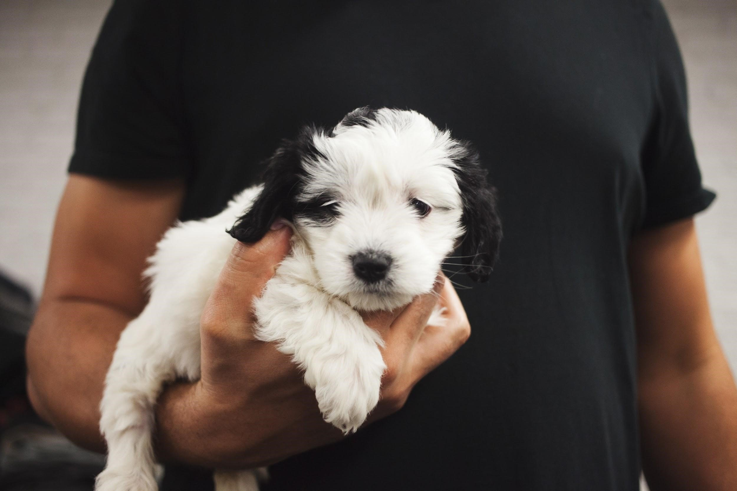 a hypoallergenic small dog is being held in the arms of a person