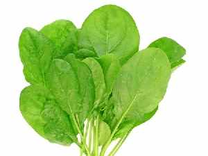 Fruits and Vegetables for Dogs:  Spinach