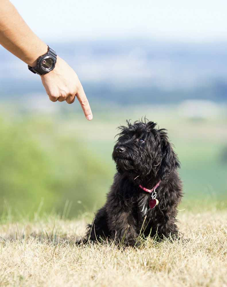 When you teach your dog to stay, you will want to make use of hand signals.