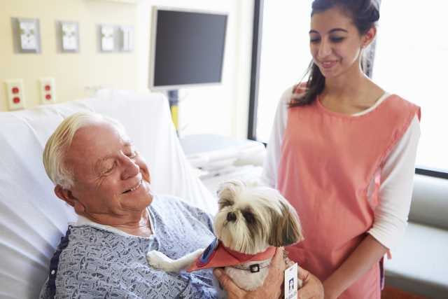 An older man is lying on a hospital bed being visited by a young Shih Tzu therapy dog.