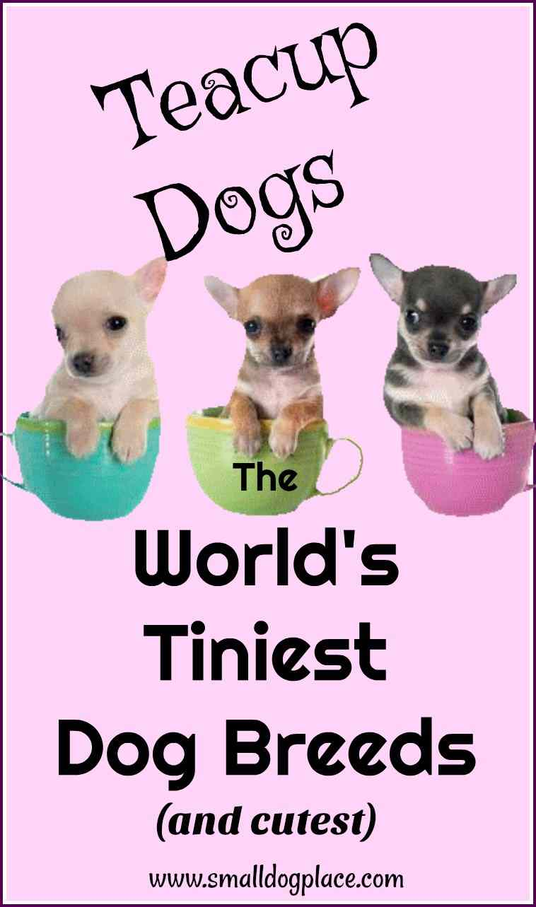 World's Tiniest Dog Breeds