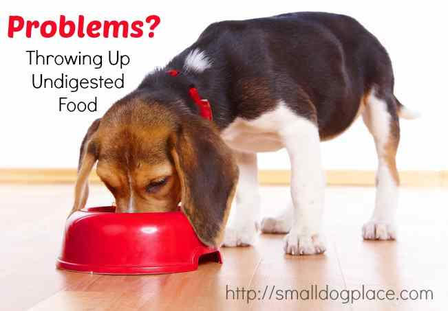 Is Your Dog Having Problems Throwing Up Undigested Food?