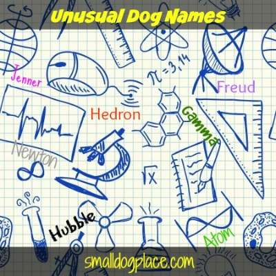 Unusual Dog Names