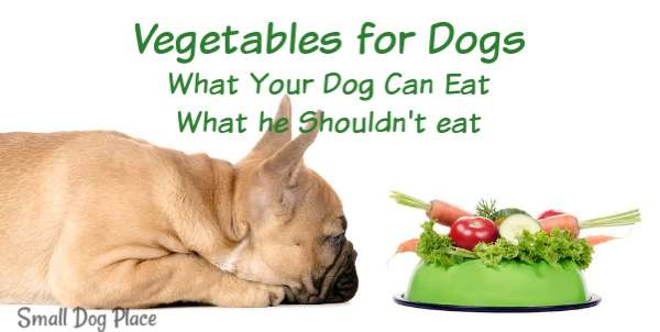 Vegetables for Dogs:  A French Bulldog is viewing a plate of vegetables