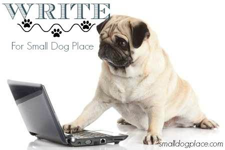 Want to write for Small Dog Place?